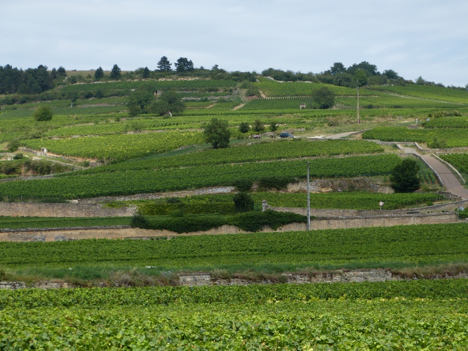 North to Burgundy